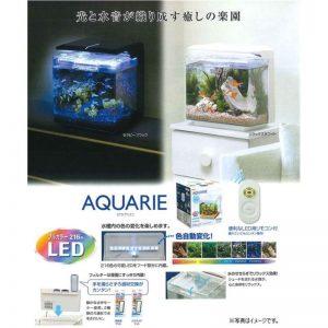 Rein Biotech GEX Aquarie White