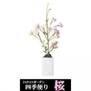 GX023285 Cherry Blossom - GEX - Reinbiotech