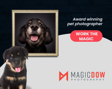 Outdoor Pet Photoshoot Services in Singapore   Magicdow Photography