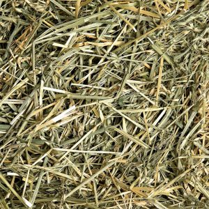 Oat Hay - Small Pet Select - Yappy Pets