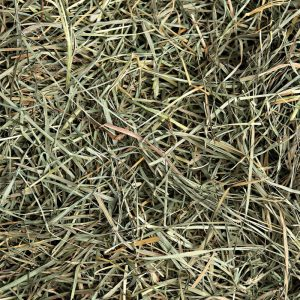 Orchard Grass Hay - Small Pet Select - Yappy Pets