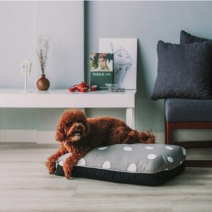 Coco medium size dog bed singapore