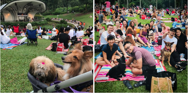 Jazz For Dogs 2019