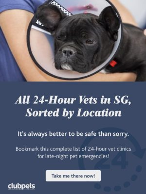 24 hrs Vet in Singapore | clubpets