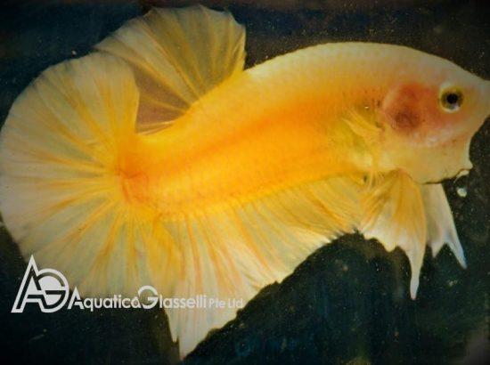 Aquatica Glasselli Pte Ltd