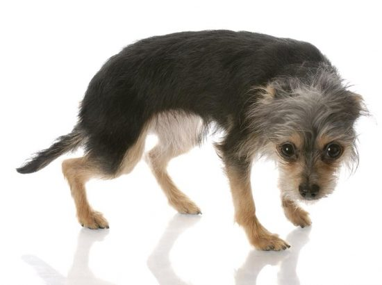 Canine Behaviour Modification Specialist, Lakshimi