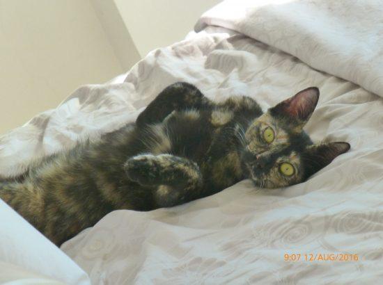 Cosmic Cats e-Pet Store