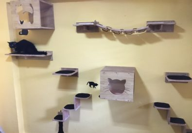 DIY Cat Climber by MSR