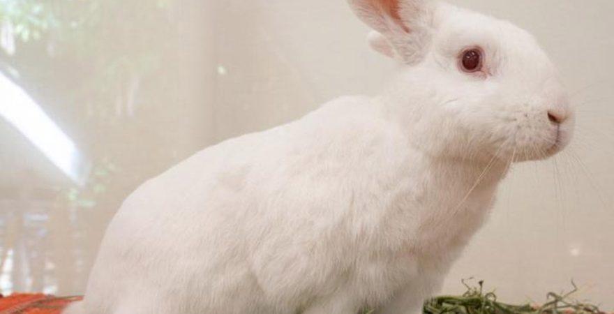 I am a Responsible Pet Owner!