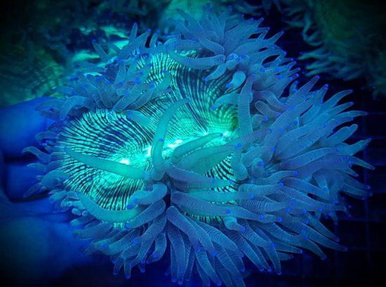 Oceania Reefz