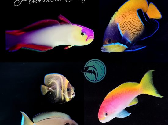 Pinnacle Aquatics