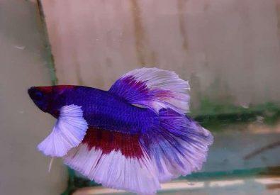 Polyart Aquarium Yis...