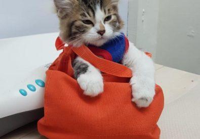 Singapore Veterinary...