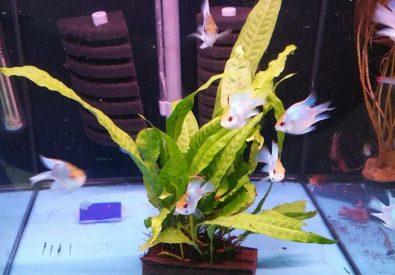 Superstar Aquarium &...