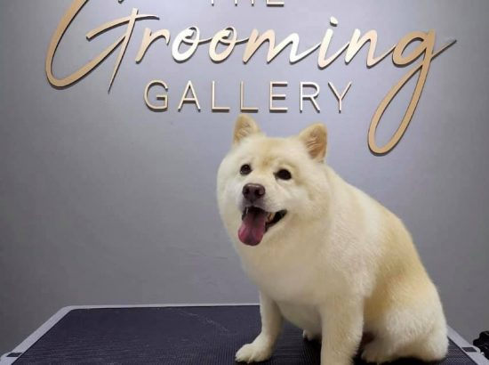 The Grooming Gallery SG