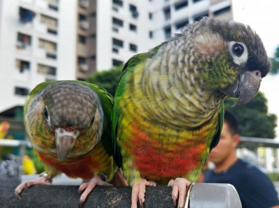 The Happy Bird Singapore