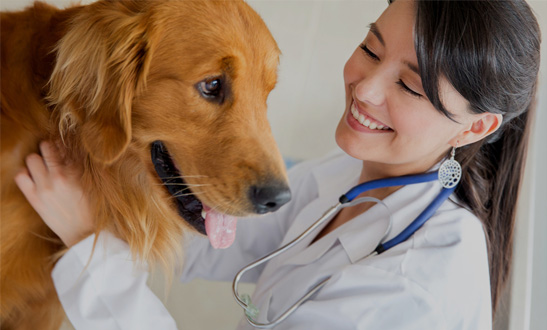 The Visiting Vets Clinic