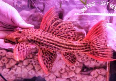 Toh Aquarium