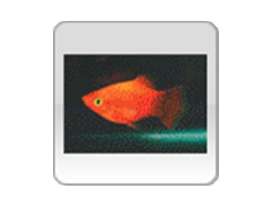 Tropical Fish International Pte Ltd