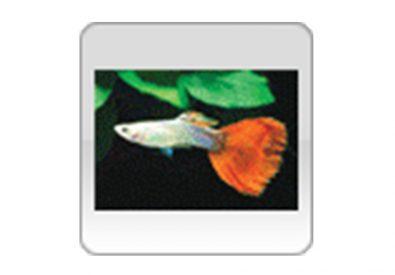 Tropical Fish Intern...
