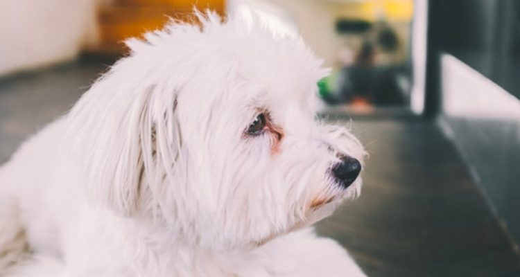 Pawrenting Guide: Dog Tear Stains Explained