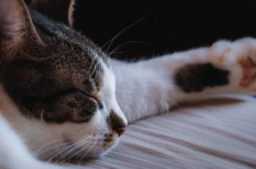 5 Common Mistakes Pet Owners Unknowingly Make That Are Harmful