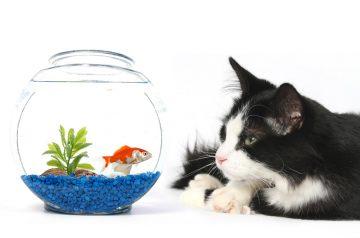 A-Fishy-Matter