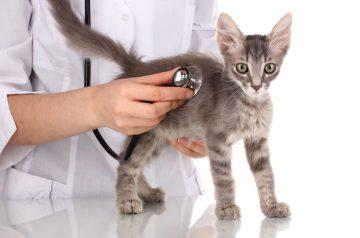 Sick Cat Symptoms