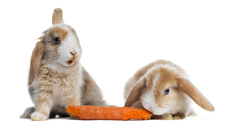 Veggies for Your Critter