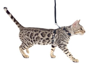 Walk That Cat