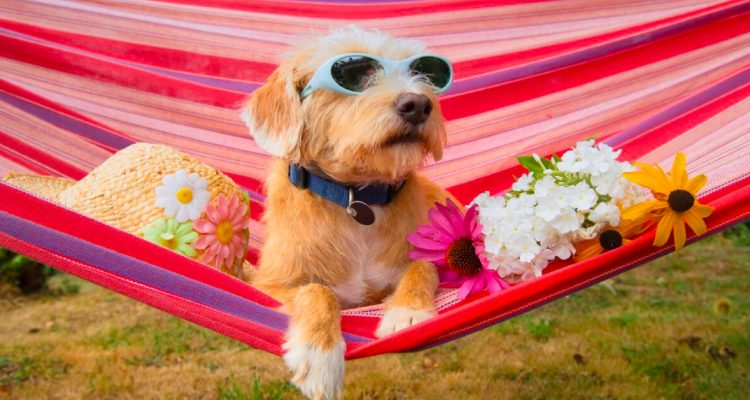 What To Look Out For When Choosing Pet Boarding and Pet Sitting Services