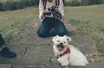 Pet Photographer