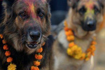 4 Festivals Around the World That Celebrate Animals