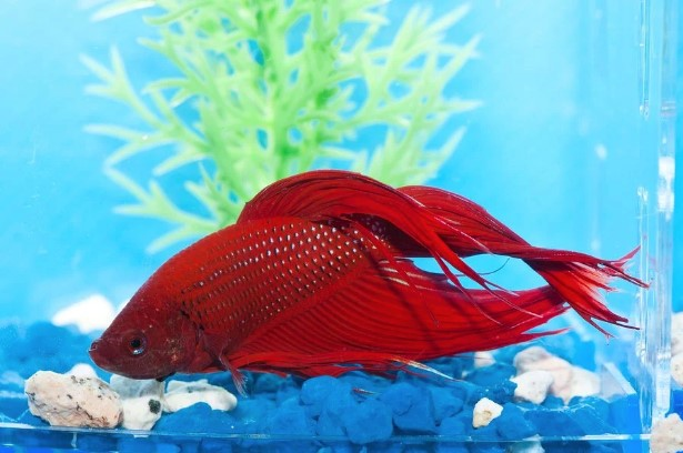 4 Common Diseases in Aquarium Fishes to Look Out For