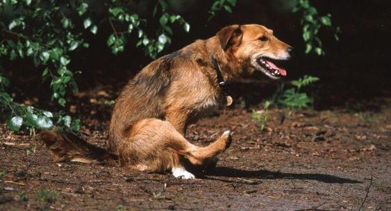 4 Common Pet Quirks Explained