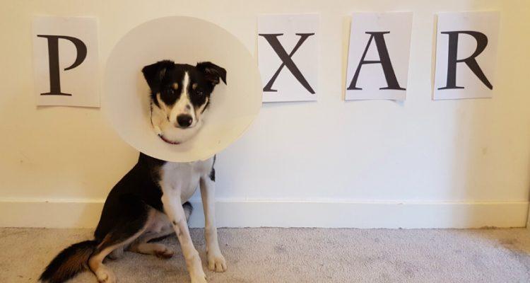4 Creative Pet Cones of Shame Ideas