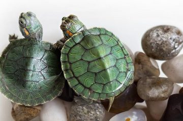 4 Most Common Myths About Turtles, Busted