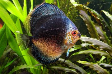 4 Signs Your Pet Fish May Be Stressed