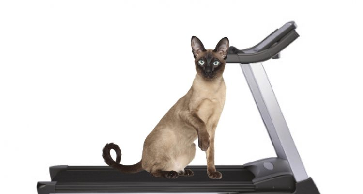 5 Ways To Get Your Cat In Shape