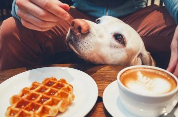 5 Common Foods That Are Toxic For Your Dog's Health