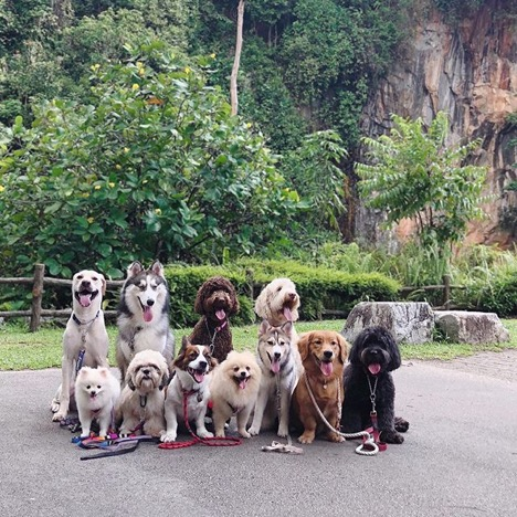 5 Dog-Friendly Hikes in Singapore for You and Your Pup