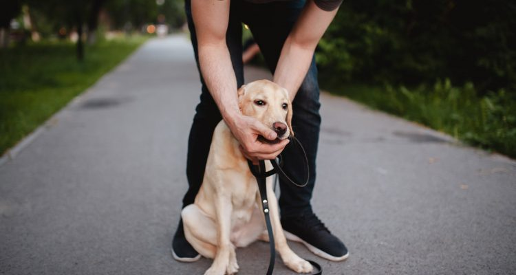 5 Essential First-Aid Tips for Pet Owners