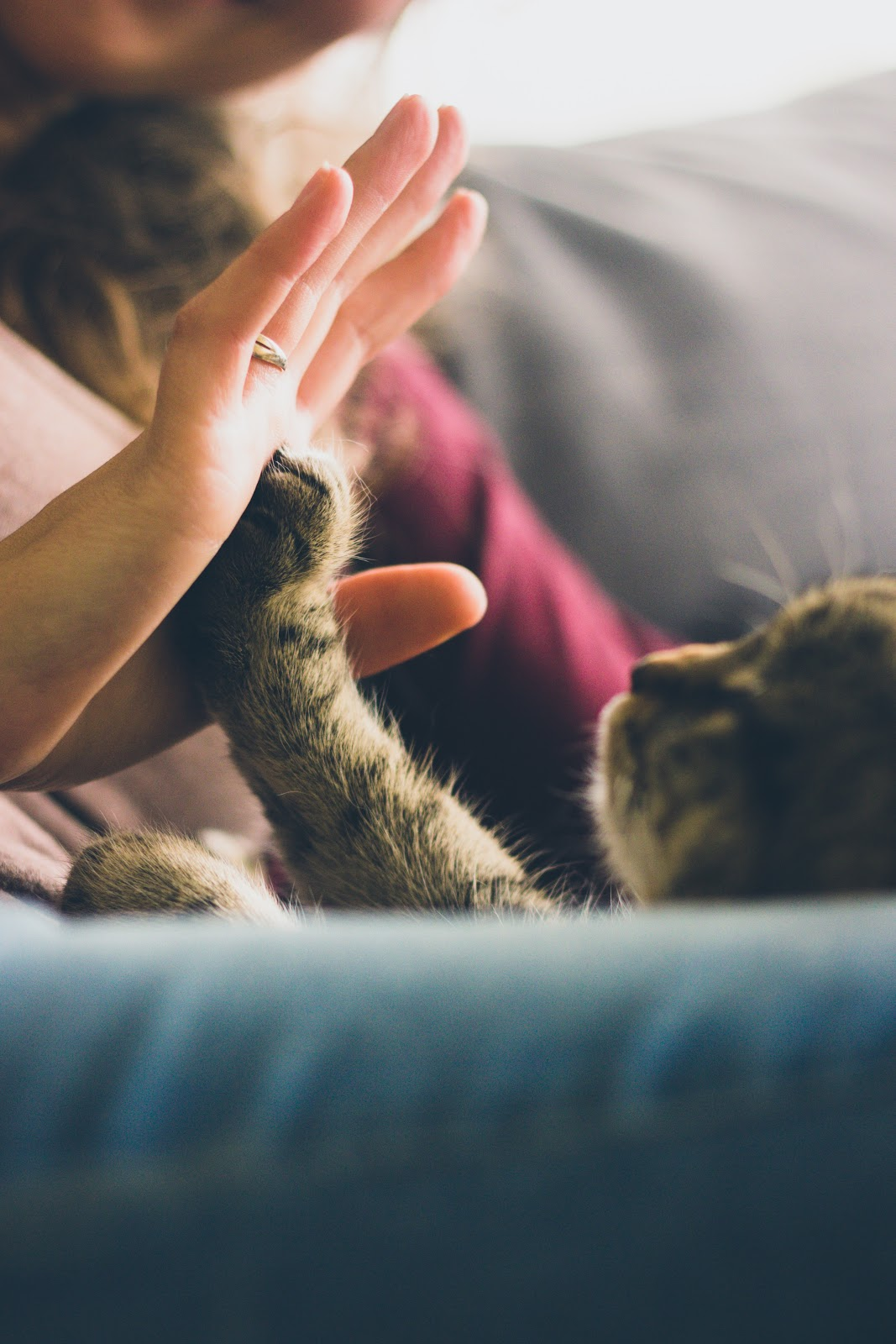 5 Ways To Remember Your Pet After They Have Gone