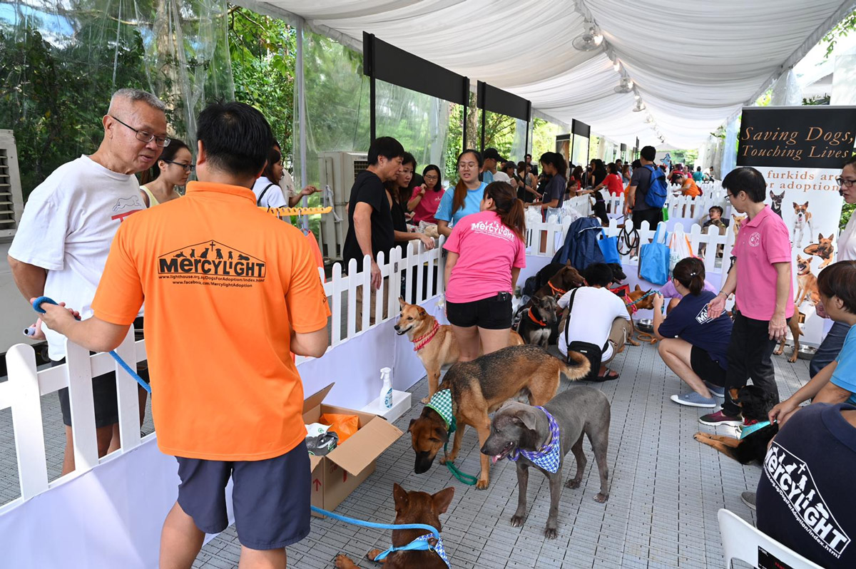 6 Highlights You Missed at NParks' Inaugural Pets' Day Out Event