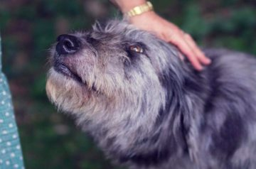 6 Common Mistakes When Greeting a Dog for the First Time