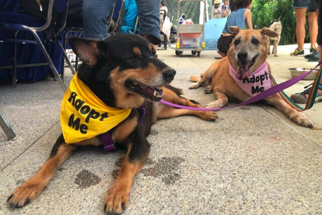 6 Local Dog Shelters to Adopt A Furkid From