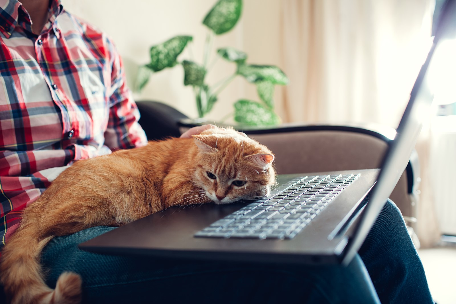 6 Secrets Only Cat Owners Know About Their Furry Friend