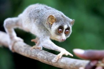 6 Exotic Pets That Are Illegal in Singapore