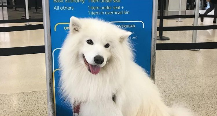 All You Need to Know About Pets on Planes: Tips and Guidelines