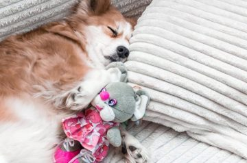 Building A Pet-Friendly Home: 6 Simple Tips